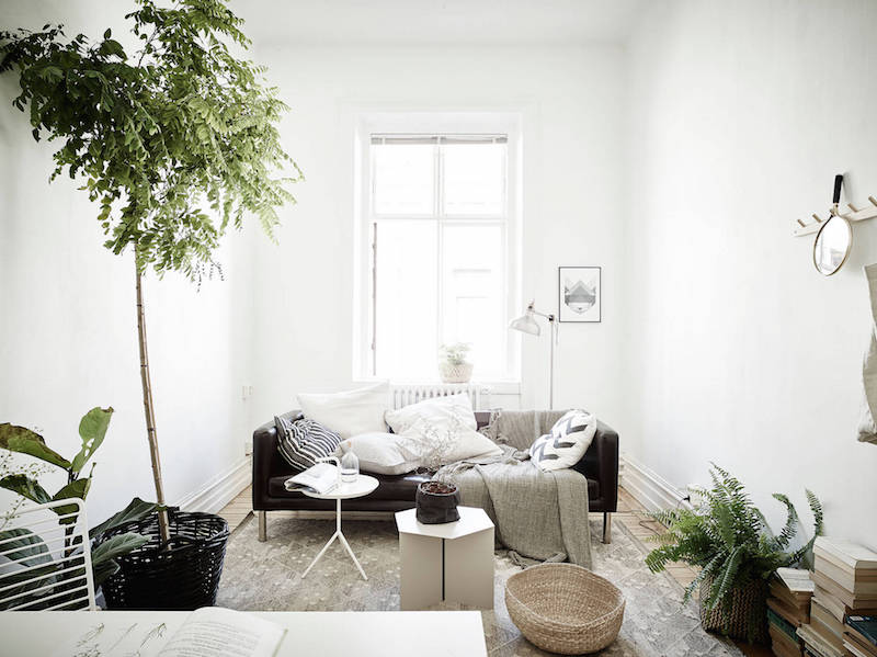 Green Plants Being Part Of The Interior Design